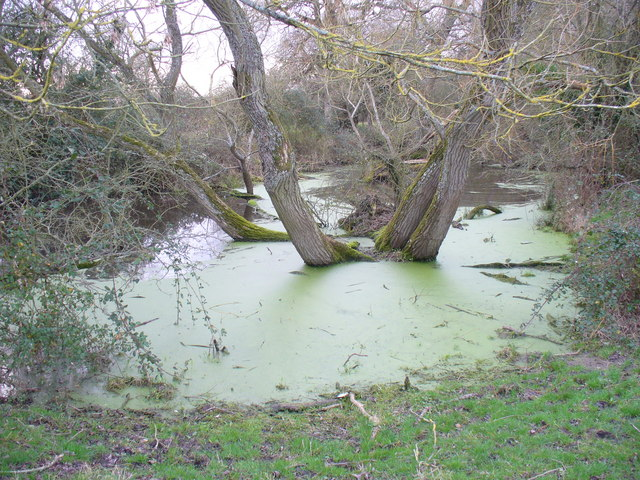 Stagnant Water by Odiham
