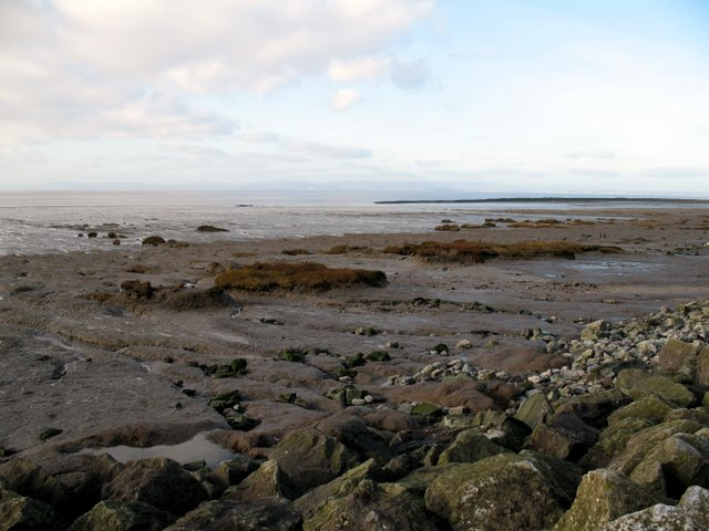 Severn Estuary saltmarsh