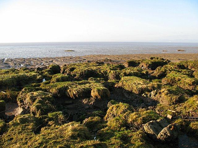 Saltmarsh and the Severn Estuary