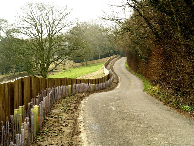 New fence and hedge near Somerby