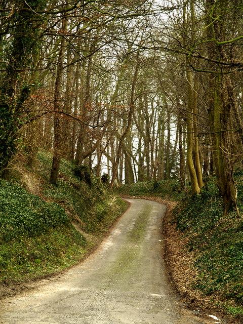 Woodland road near Somerby