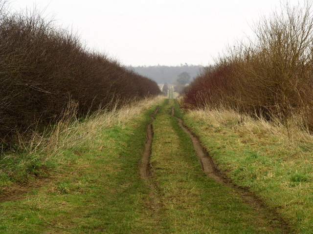 Owmby Wold Lane