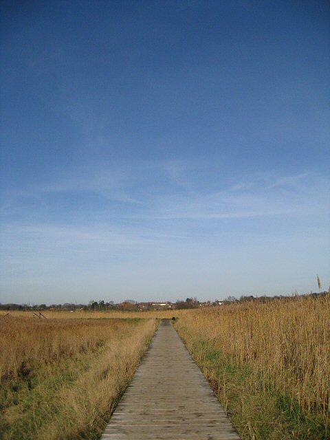 Boardwalk across the reedbeds