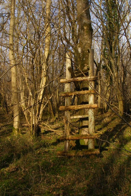 Ramshackle high seat, Reddish Gore
