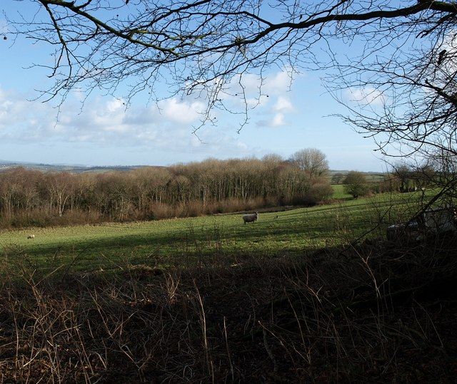 Moor Copse from near Christmas Close