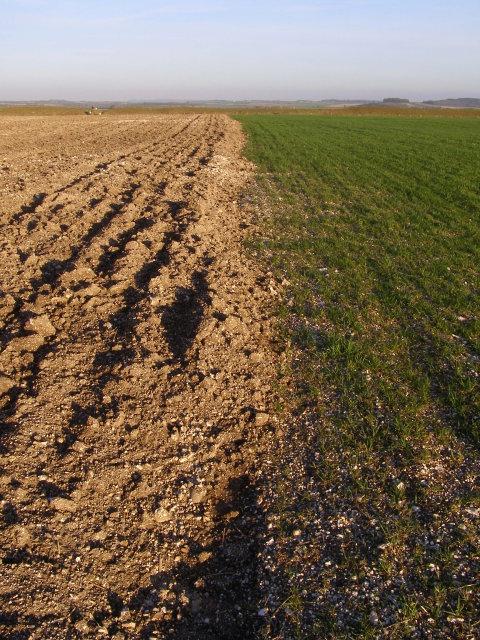 Half-sown field