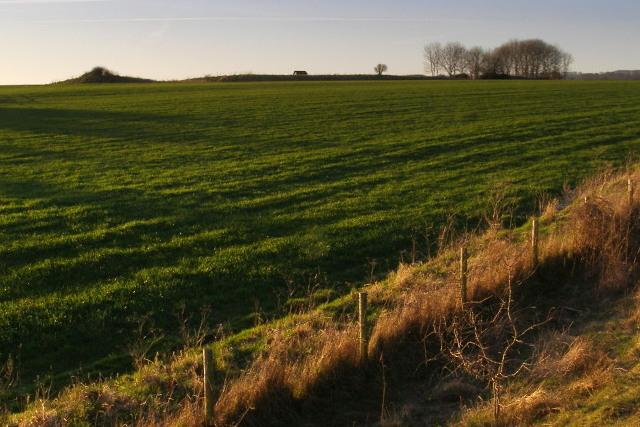 View towards a long barrow from Bokerley Dyke