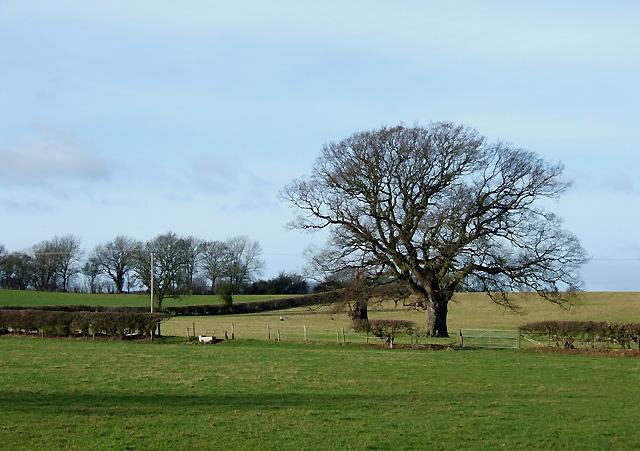 Farmland south of Holdgate, Shropshire