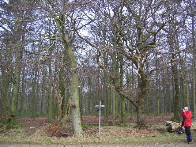 Hendale Wood
