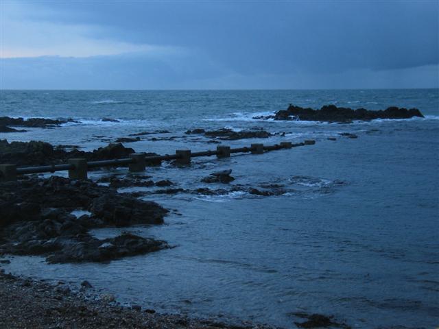 Atlantic ocean and wildlife