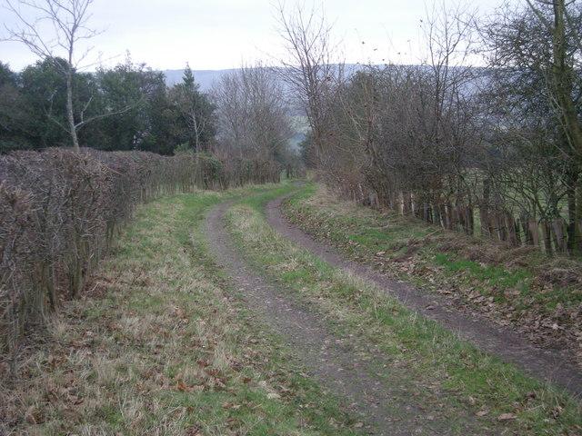 Farm-track near Lower Gravenor