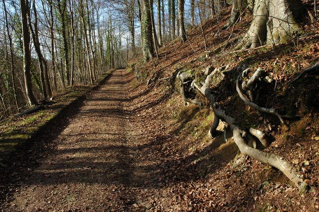 Track through Worksman Wood