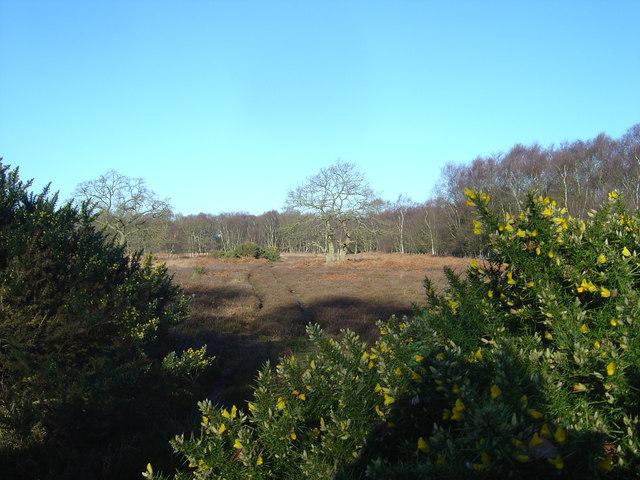 Lowland heath at North Cliffe Woods