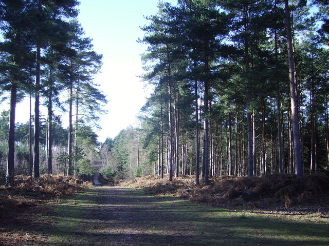 Track in Heath Warren Wood