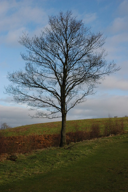 Tree on the Clent Hills