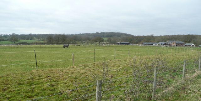 Pasture land near Danhill Farm