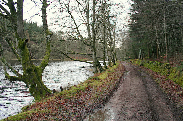 Track running along western edge of Geddes Fishery