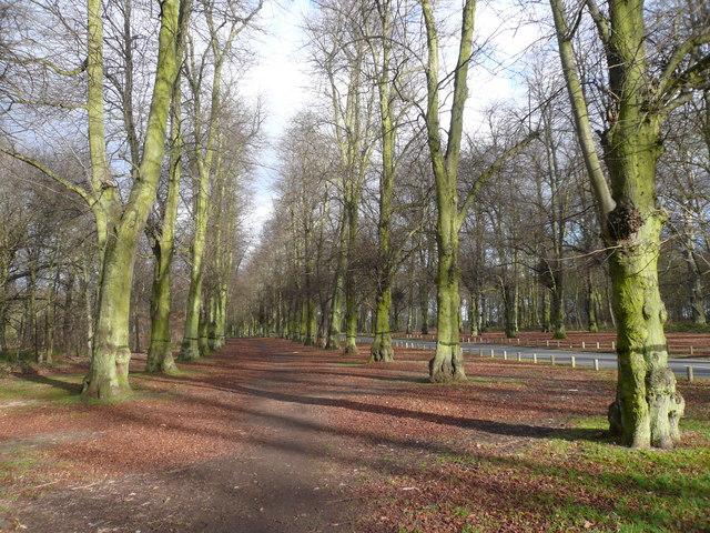 Clumber Park - Bridleway alongside Limetree Avenue