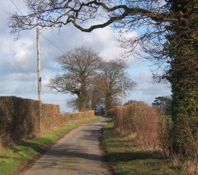 Lane from Coddenham towards Gosbeck