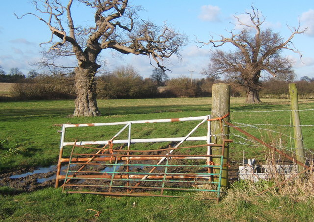 Gate into field with two rugged oaks