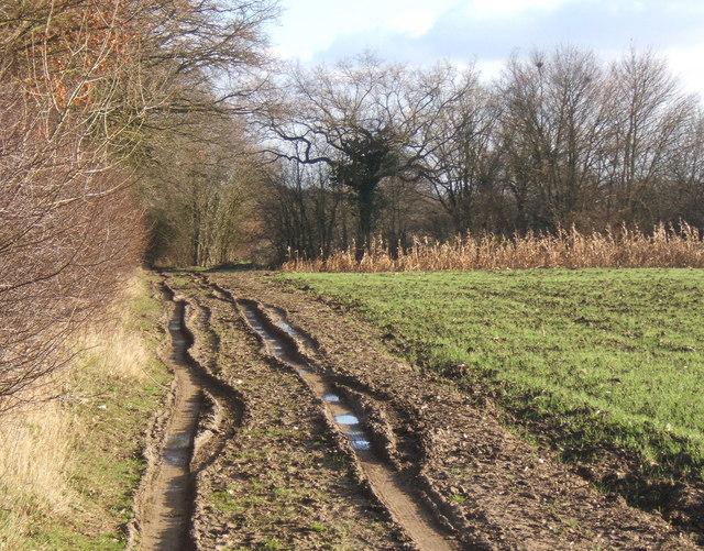 Track north of Gosbeck Wood