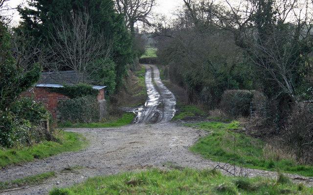 Yew Tree Track