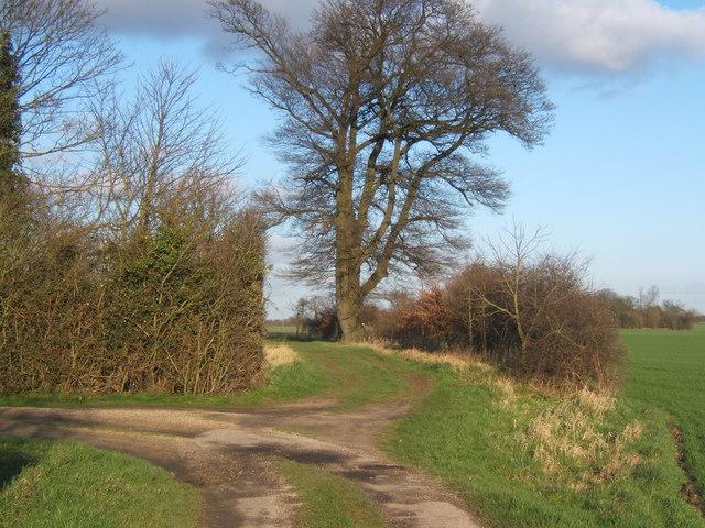 Path near Crowfield Hall
