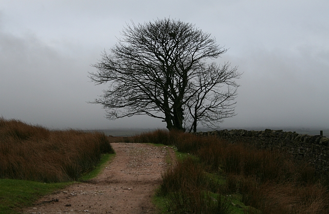 Tree Beside The Settle To Carlisle Railway.