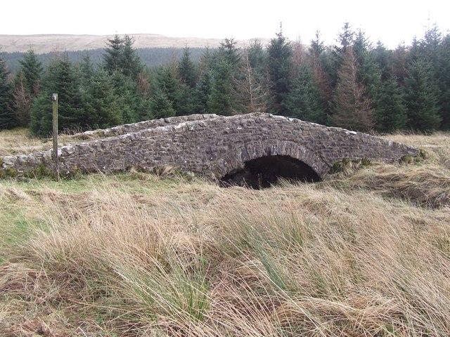 Bridge amidst the conifers