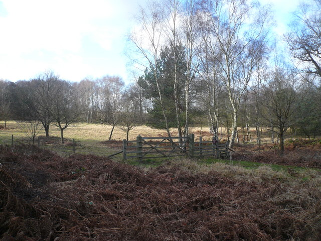 Clumber Park - View off Road to South Lodge