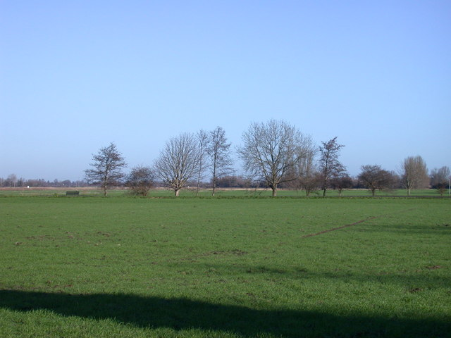 Wheatfield and trees beside the Cam