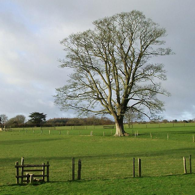 Stile and Oak Tree in Fields near Larden Hall, Shropshire