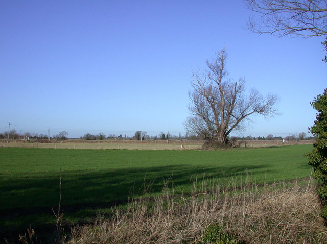 Wheatfield and tree beside the Cam
