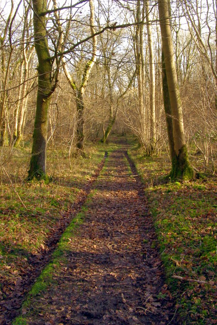 Footpath through woods, Reddish Gore