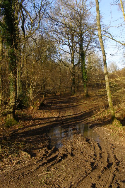 Muddy track, Knighton Wood