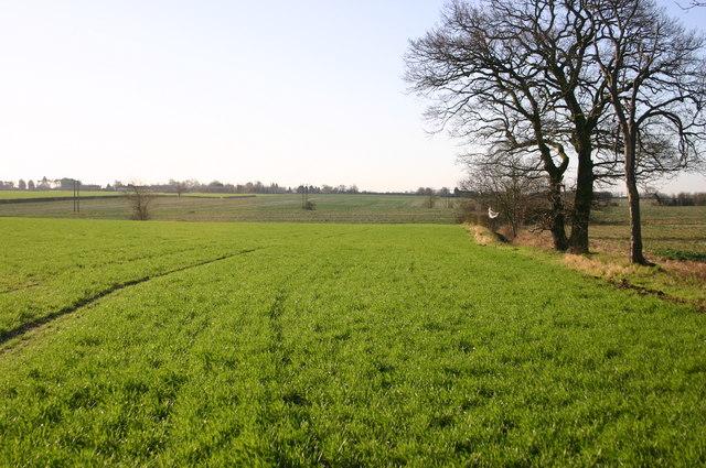 Field tree lined edge