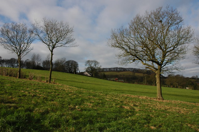 Trees in the Clent Hills