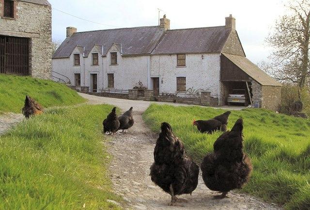 Llwynffynnon Uchaf farmhouse