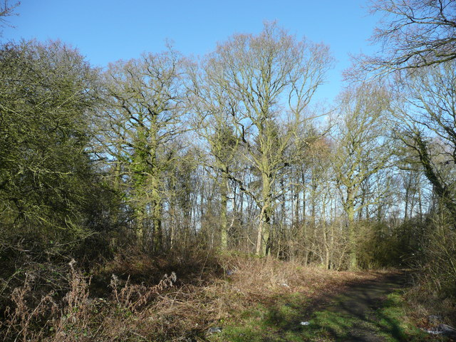 Corner of Hell Coppice