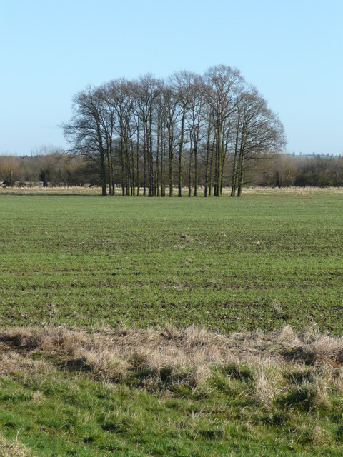 Unmarked copse