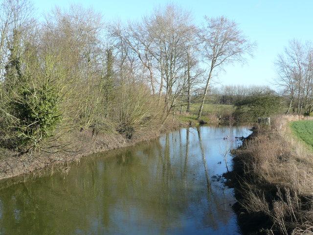 River Ray at Islip