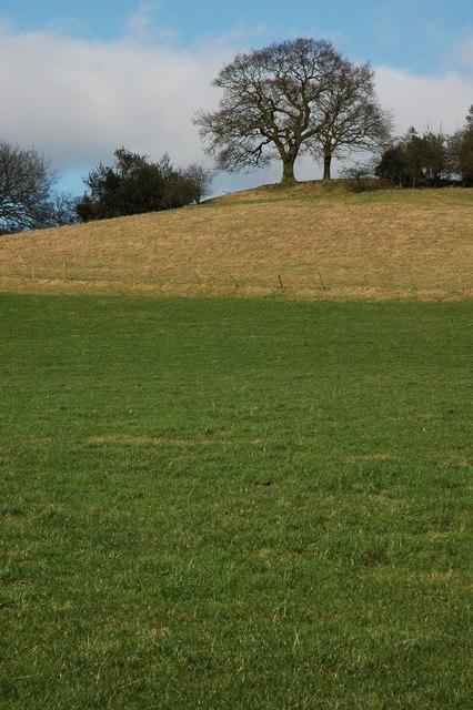 Trees on Walton Hill