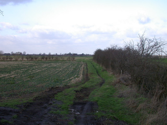 Fieldside track near New Farm