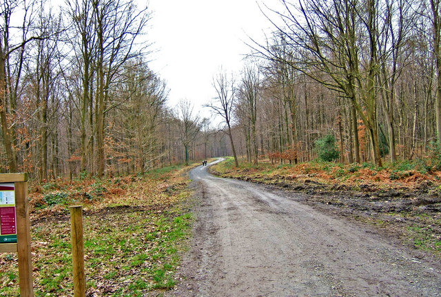 Forestry Road leading from Wyre Forest car park