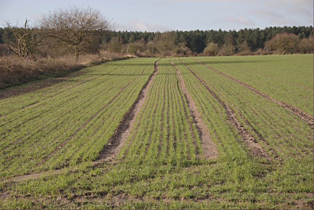 Recently-sown field looking towards Robin Wood