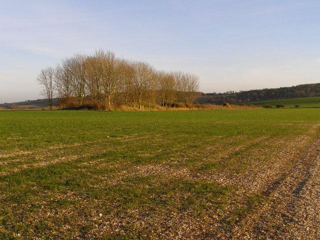 A very long long barrow, Bokerley Down