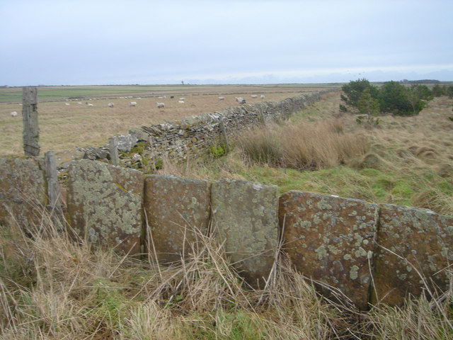 Stone dykes at Greenland Mains