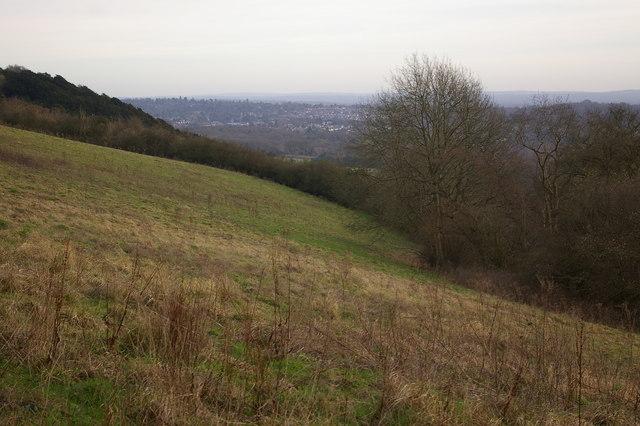 Rough grassland on Thistle Hill