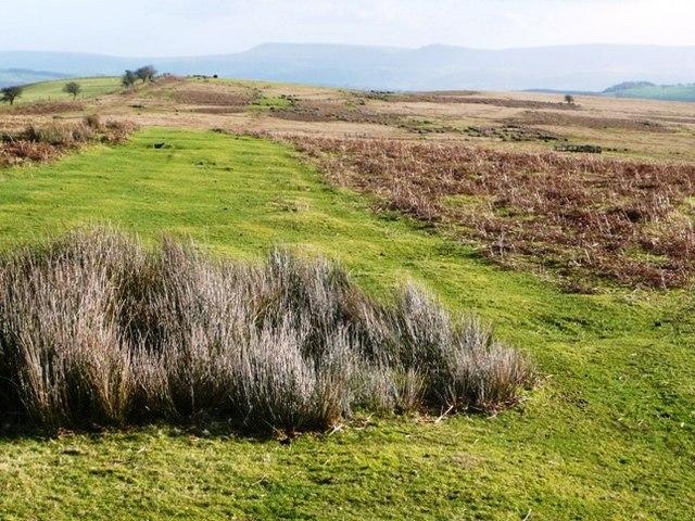 Clear path across the moor