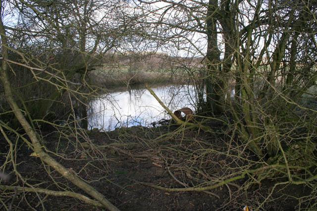Small pond near Eaton Lodge Farm